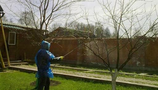 Фото профессионального опрыскивания деревьев от вредителей