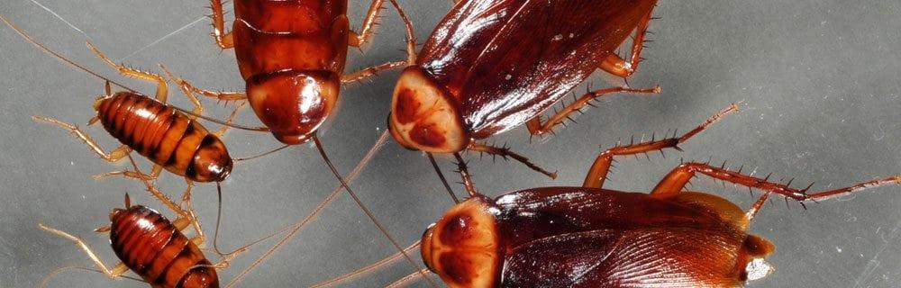 Фото тараканов