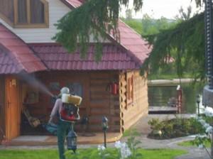 Фото профессионального уничтожения древоточца с помощью фумигации